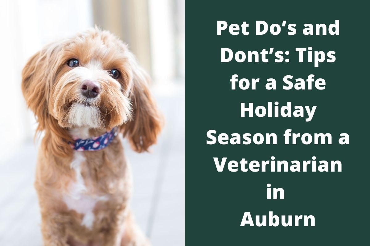 Pet-Dos-and-Donts_-Tips-for-a-Safe-Holiday-Season-from-a-Veterinarian-in-Auburn