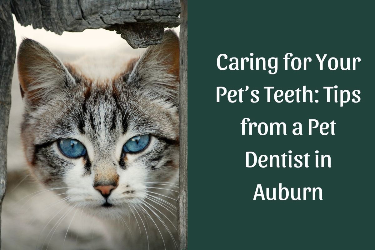 Caring-for-Your-Pets-Teeth_-Tips-from-a-Pet-Dentist-in-Auburn